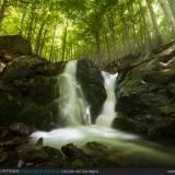 Alberi e cascate