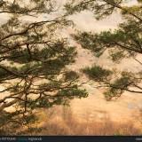 Alberi e forme delle Highlands