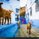 Per le vie di Chefchaouen in Marocco.