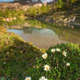 Fioritura al Lago Limides