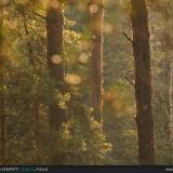 La foresta di Biebrza in Polonia, in tutta la sua atmosfera magica!
