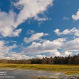 Fotografia con dei bellissimi colori della foresta bielorussa-polacca di Białowieża
