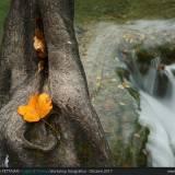 La foglia sul ramo