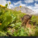 Marmotta e Passo Valparola