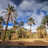 Pomeriggio nel palmeto
