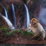 Scimmie ad Ouzoud