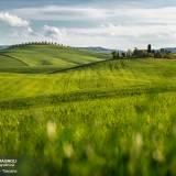Le verdi colline della val d'Orcia.