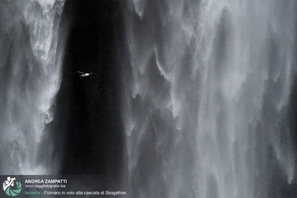 Fulmari: foto dei bellissimi uccelli d'alto mare sulle coste islandesi