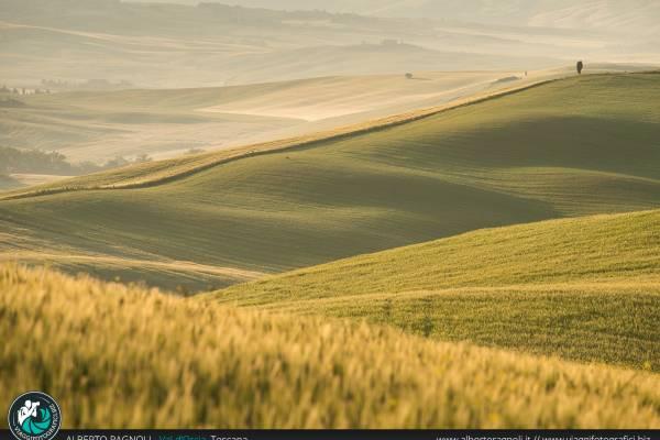 Fotografie delle Strade Panoramiche della Val d'Orcia, Toscana