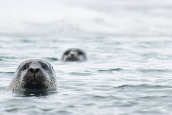 Foche: fotografiamo le foche