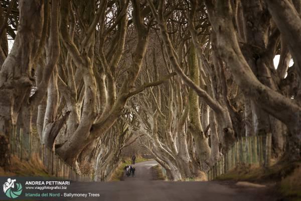 Viale alberato di Ballymoney nell'Irlanda del nord