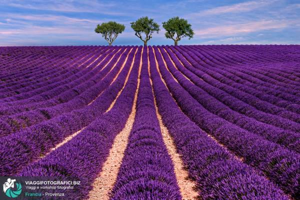 Scatti fotografici della Provenza, nel Sud della Francia