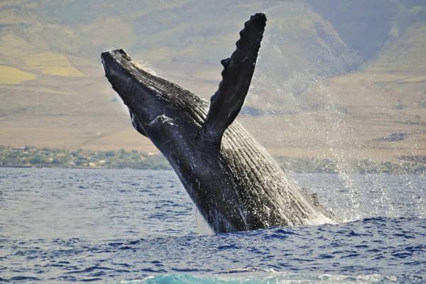 Whale Watching: escursioni marine per avvistare e fotografare le balene