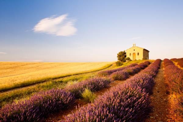 Fotografie di Valensole e dei suoi campi viola di lavanda