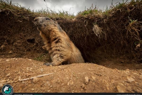 Fotografie scattate alla Marmotta
