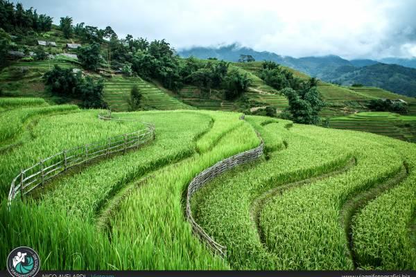 Viaggio fotografico in Vietnam.