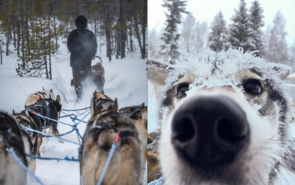 Escursione fotografica cani da slitta lapponia finlandese