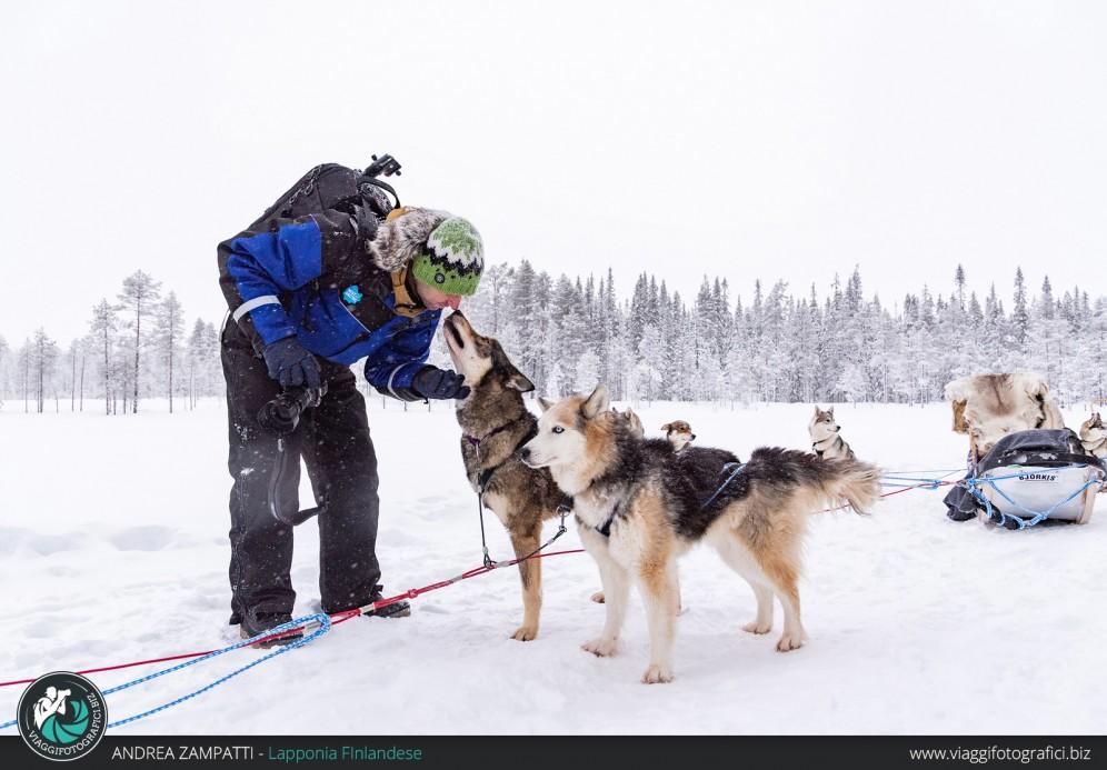 escursione-husky-lapponia-finlandese