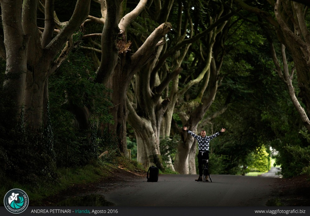sotto the dark hedges