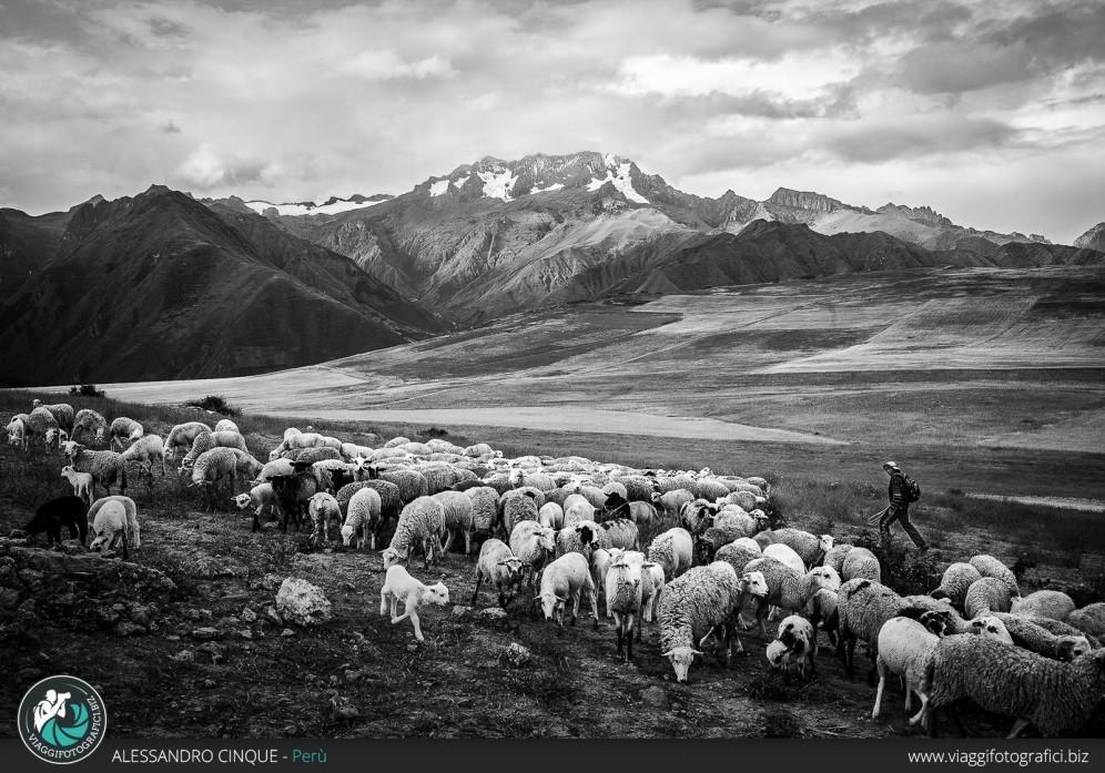 Contadino che porta le pecore al pascolo nella Valle.