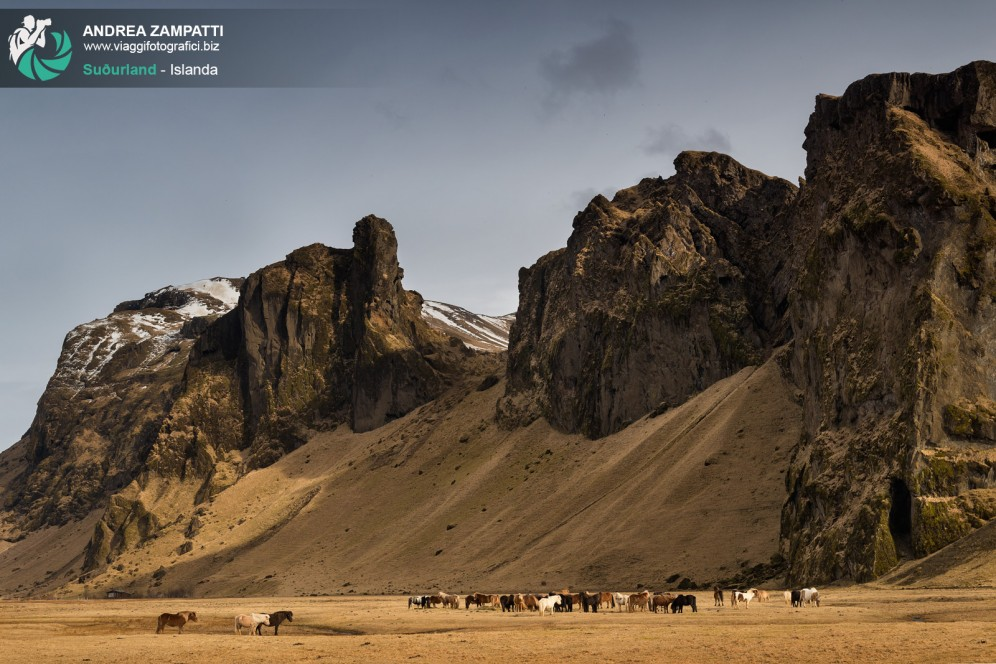 Cavalli a Suðurland