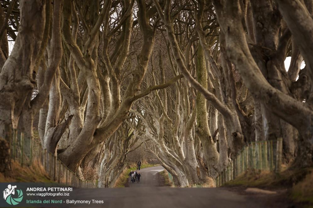 Viale alberato di Ballymoney, Irlanda.