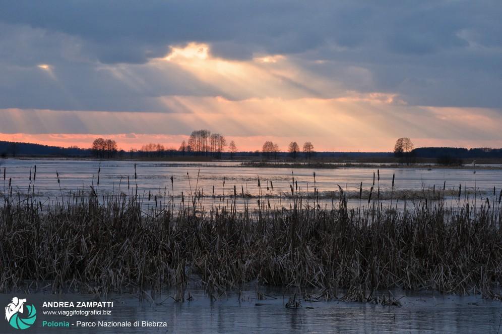 Foto spettacolare del tramonto roseo al Parco Nazionale di Biebrza, Polonia