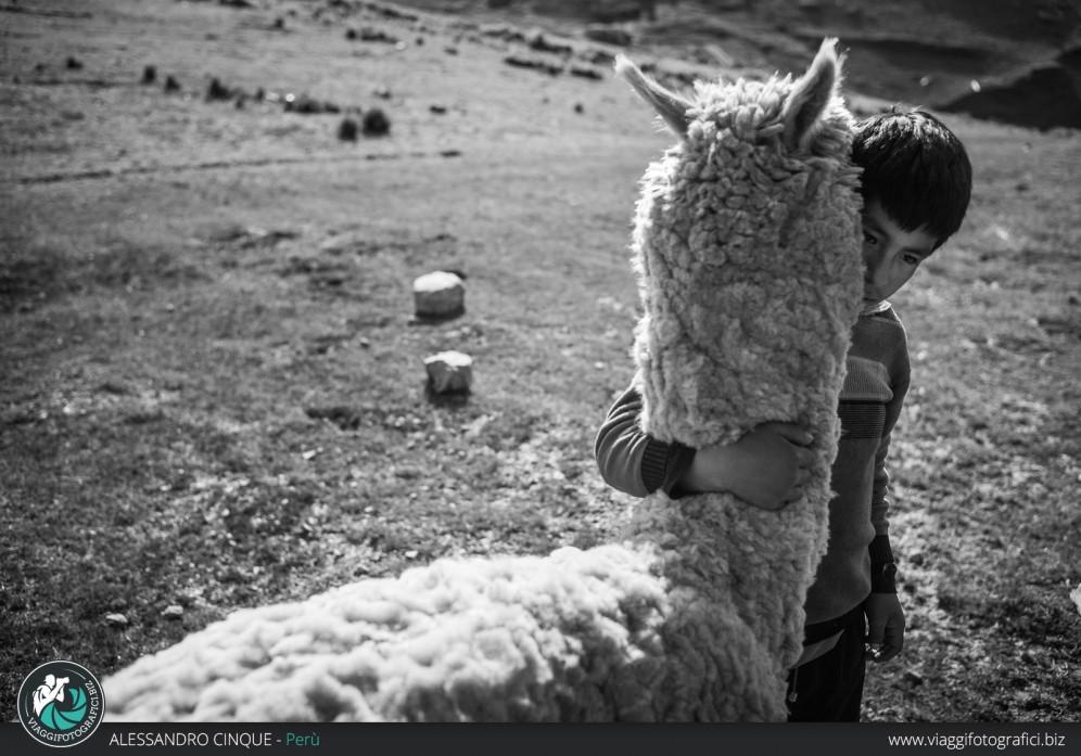 Gesto di affetto tra un bambino e un lama.