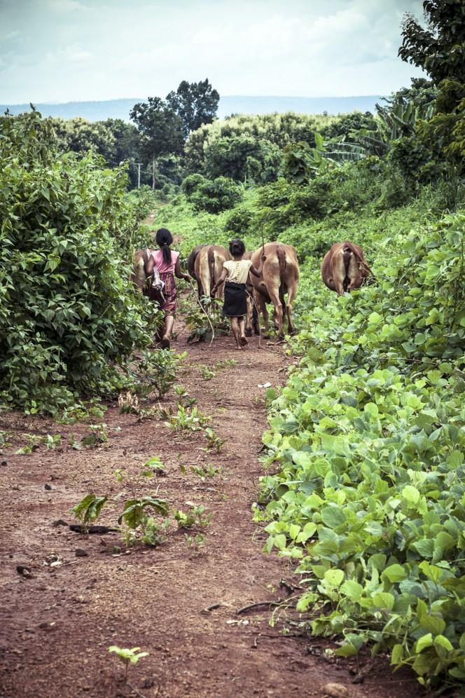 Laos - giovani pastorelle nel Bolaven.