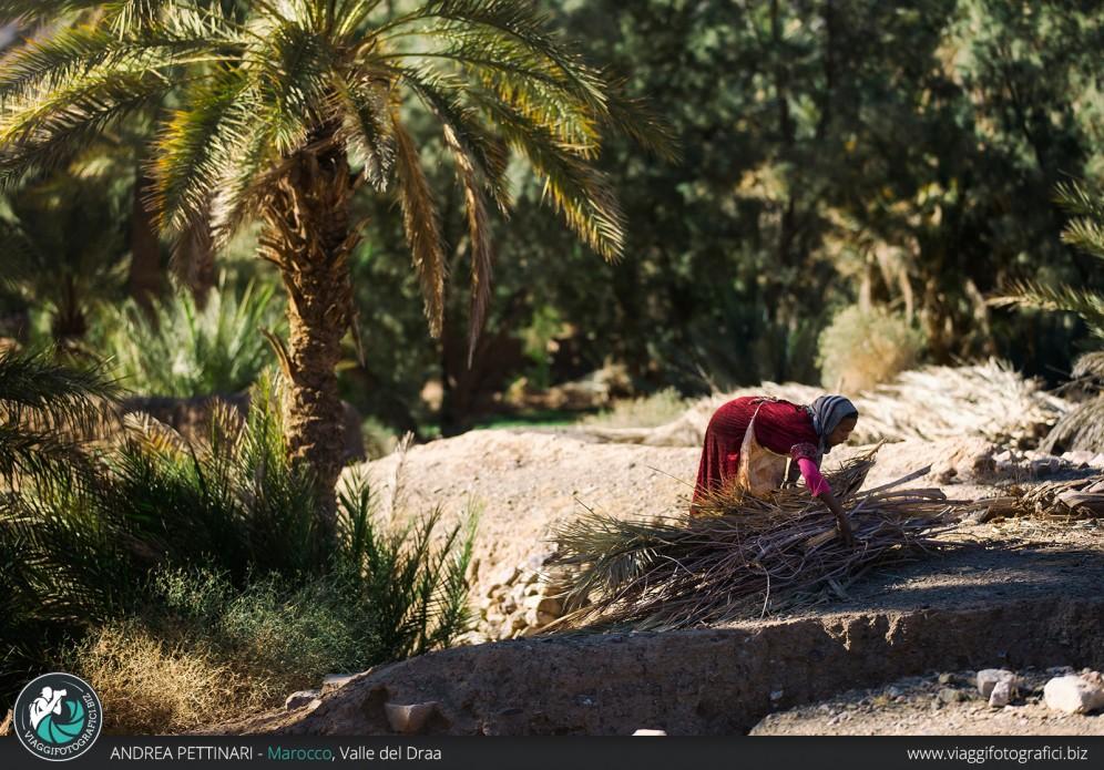 Raccolta foglie di Palma