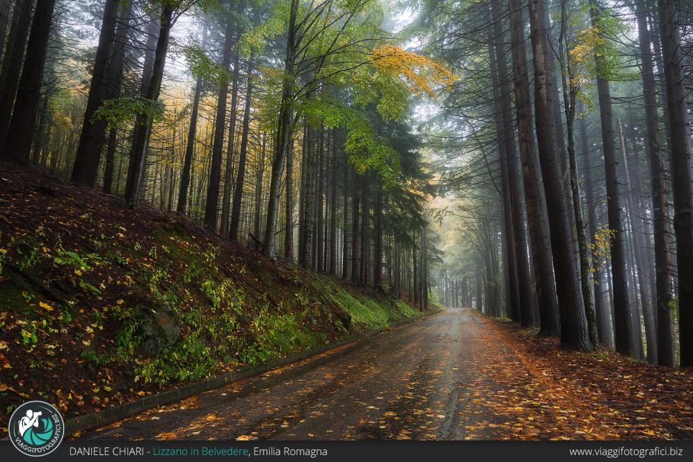 La strada nella foresta, Parco Corno alle Scale.