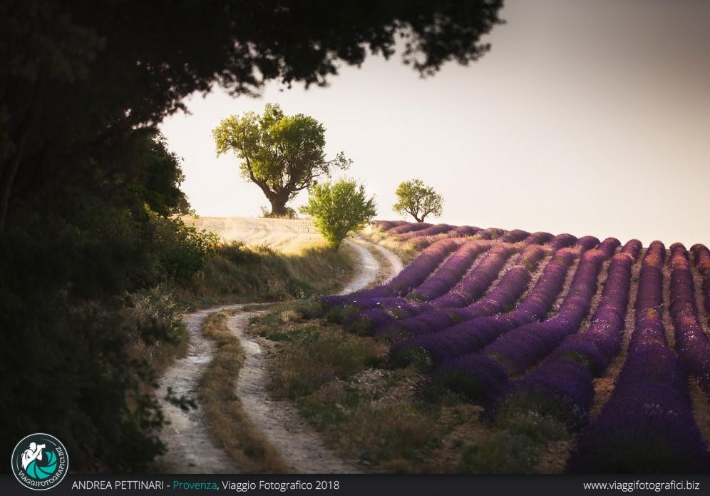 Strada tra i campi