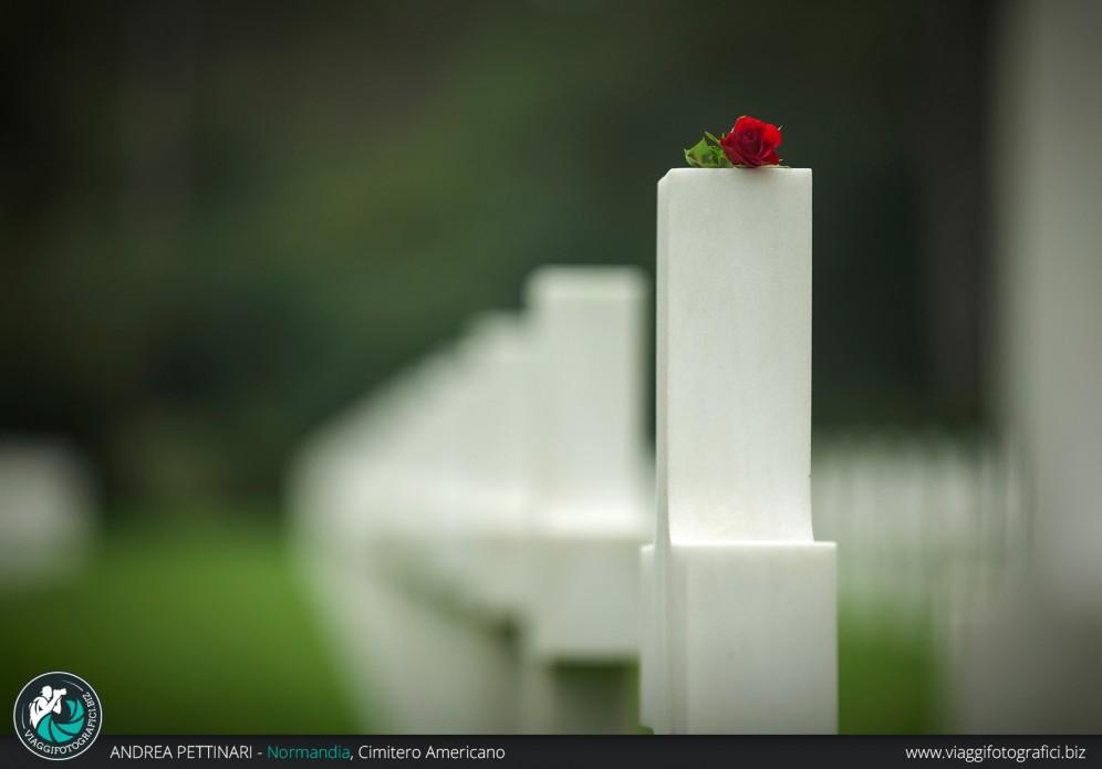 Una rosa sulla tomba