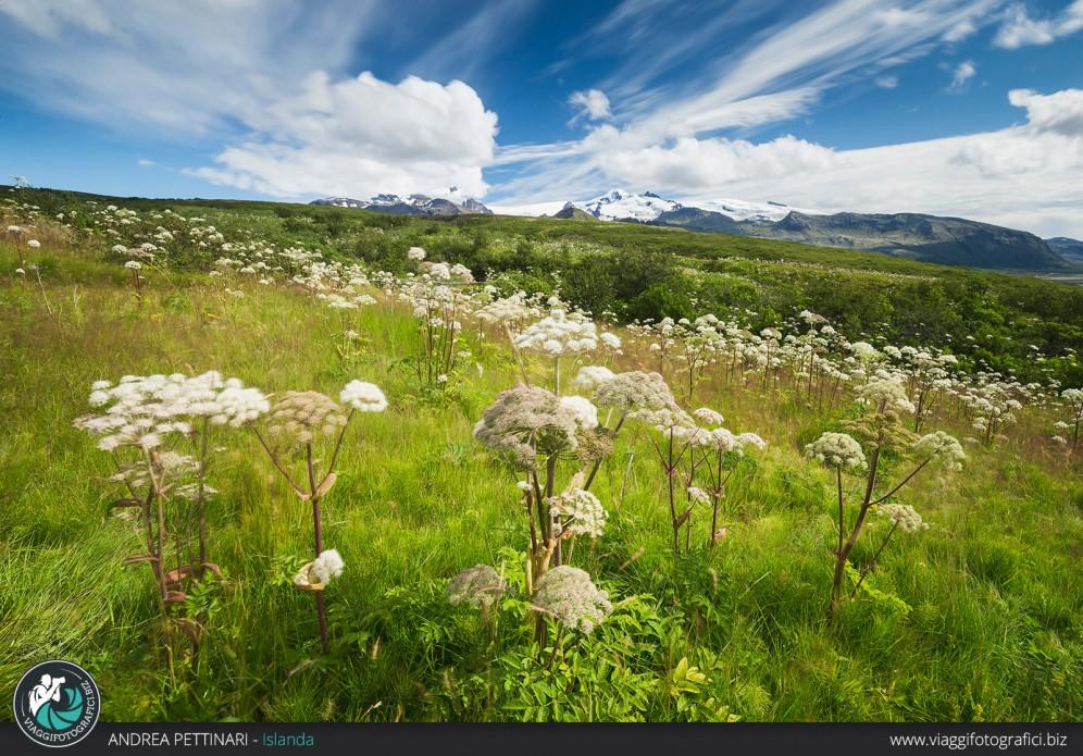 Vatnajökull e l'estate