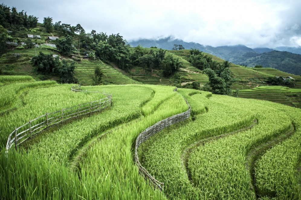 Vietnam - Risaie a terrazza sulle montagne intorno a Sapa.
